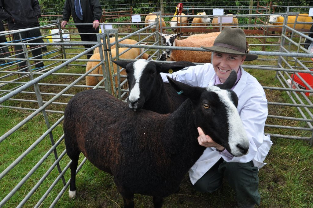 Faye Anderson with her zwartbles sheep which picked up several prizes. B32show02