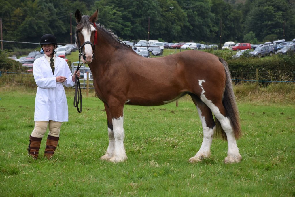 Diane Lewis with her champion Clydedale Rosie. 01_B32show05