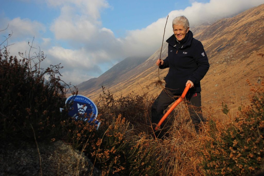 A volunteer plants an Arran Whitebeam - endemic to Arran and one of the worlds rarest trees - propagated by Henry Murdo and Margo Mclellan, and then cared for by the Healthy Outdoors Team.