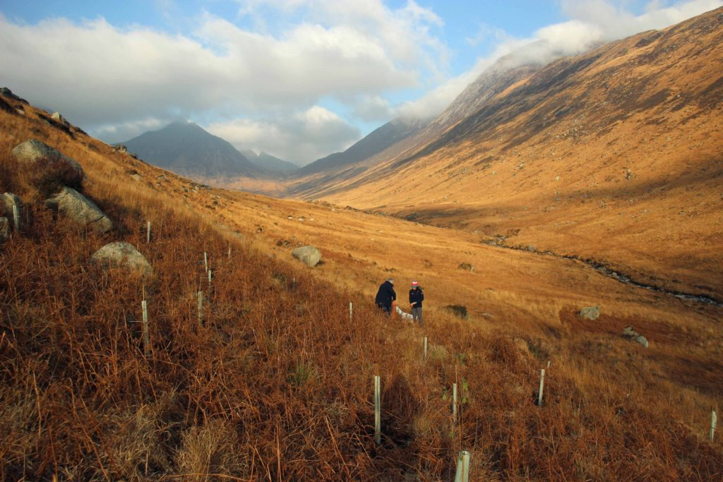 A number of trees are planted in the bracken areas owing to the soil being deeper and less acidic than other parts of the glen.