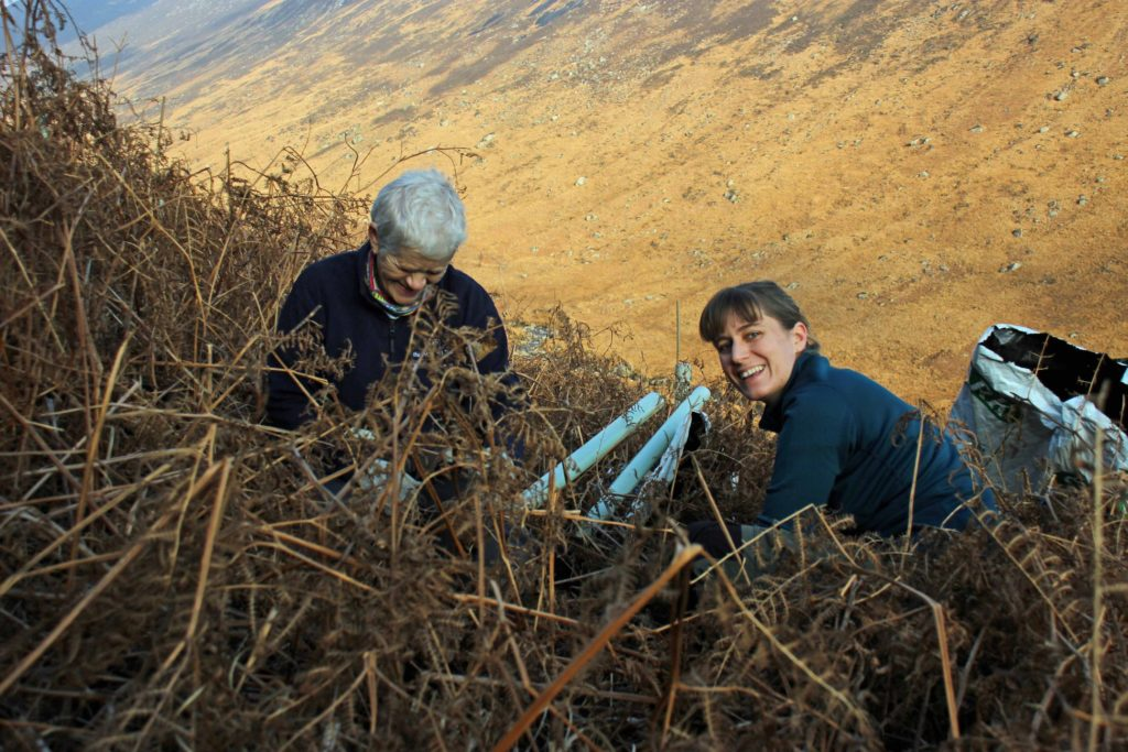 Volunteers share a laugh among the bracken while planting trees.