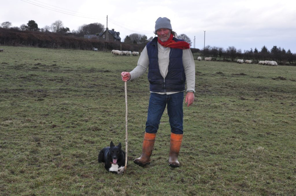 FEBRUARY - Wullie Stevenson of Whiting Bay was selected to represent Arran and Kintyre in the Scottish National Sheep Dog Trials in Kintyre. Pictured here are Wullie and maid before the final.