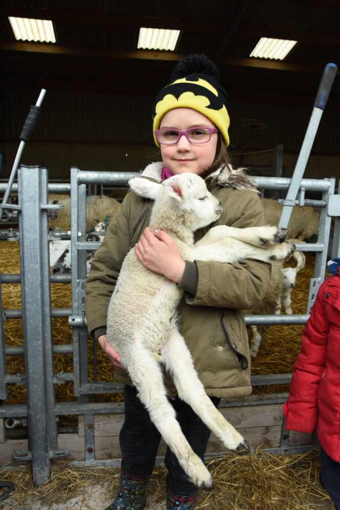 A young girl gets to grips with holding a wriggling newborn lamb.