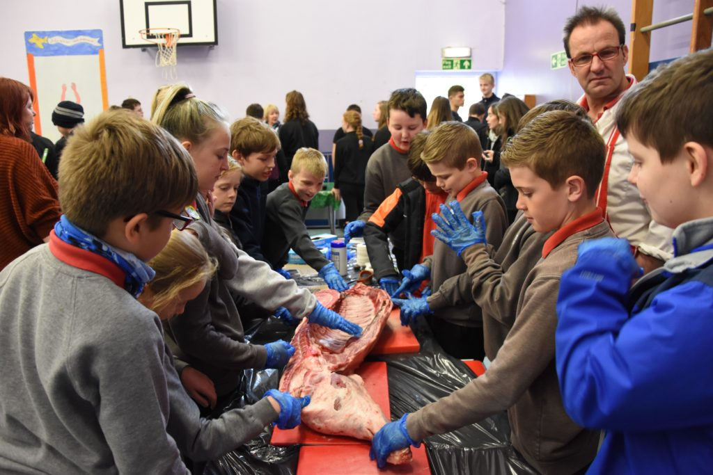 Primary pupils handle the meat provided by the Arran Butcher.