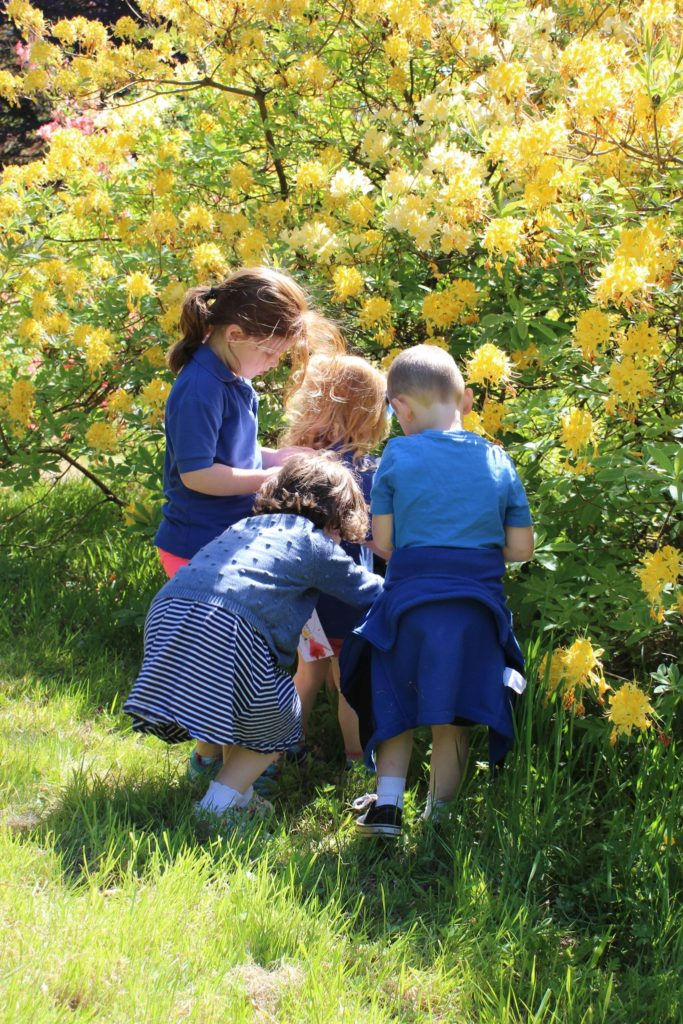 Brodick Early Years pupils search through the bushes and flowers looking for materials to use to build a fairy house. Photo: Arran Ranger Service.