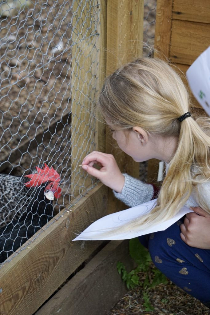 Visitors were allowed to feed some of the animals, including this young girl who provided a tasty morsel for a chicken.