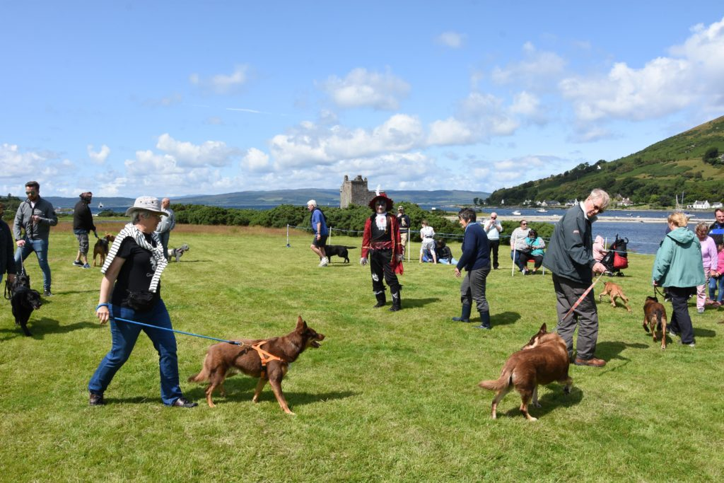 Owners parade with their pooches during the dog competition.