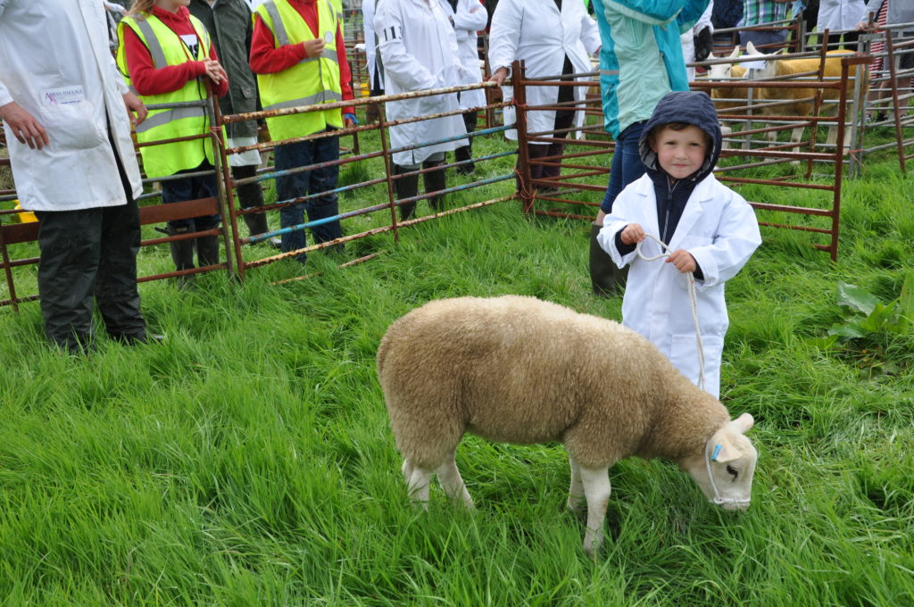 Tod McNeish with his pet lamb in the judging ring.