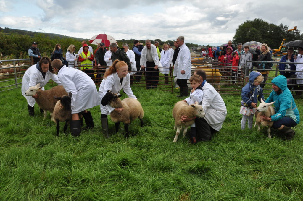 Judging underway in the pet lamb contest.