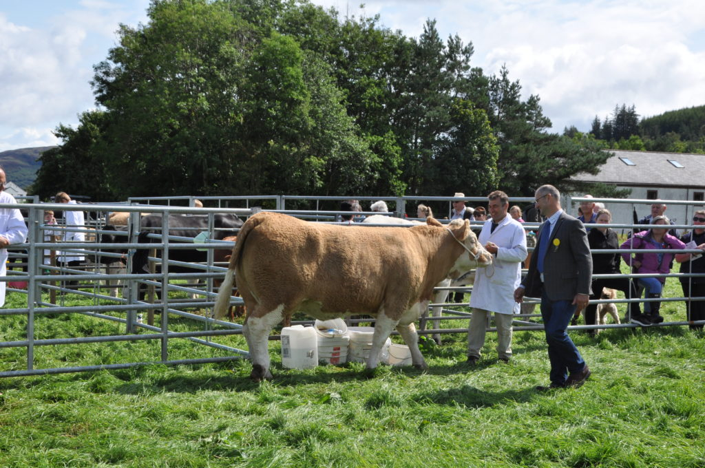 Alastair Currie of Birchburn, Shiskine with his class winning pure bred cow or heifer, in calf or in milk.