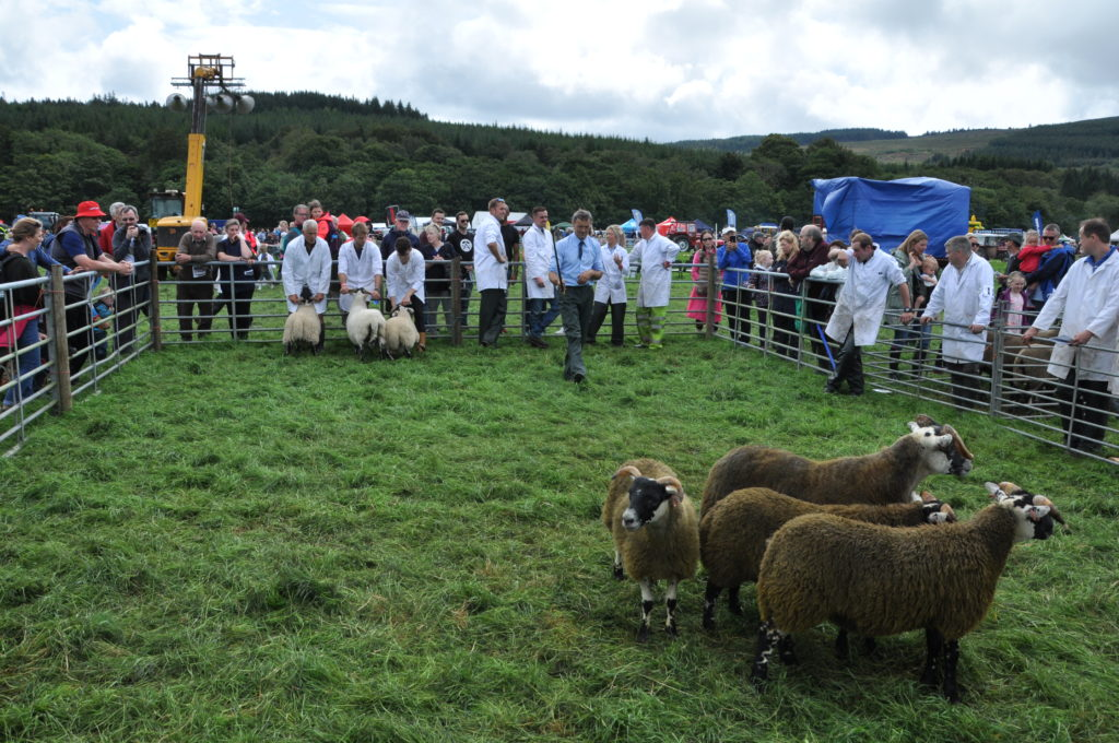 The Blackface sheep judging attracts a lot of interest.