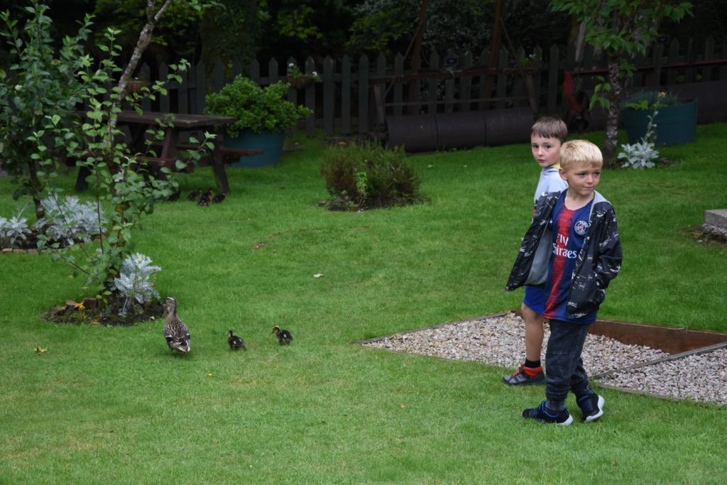 Children are momentarily distracted from all of the tractors by a number of ducklings that visited the museum's gardens.