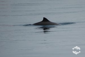 Protecting porpoises in the Clyde