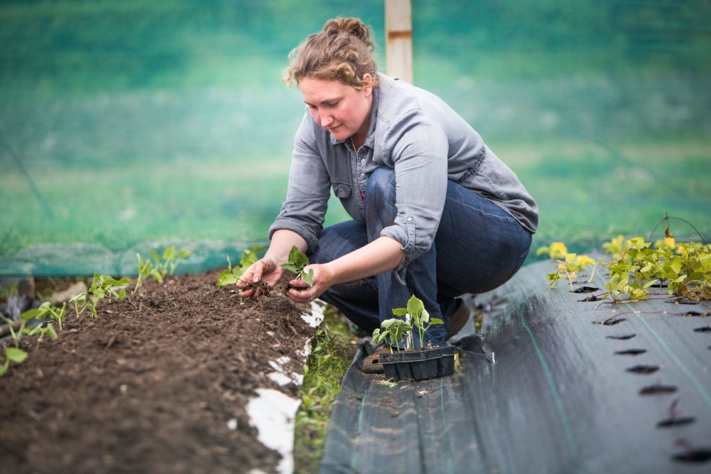 Kildonan community farm wins £25,000 funding boost
