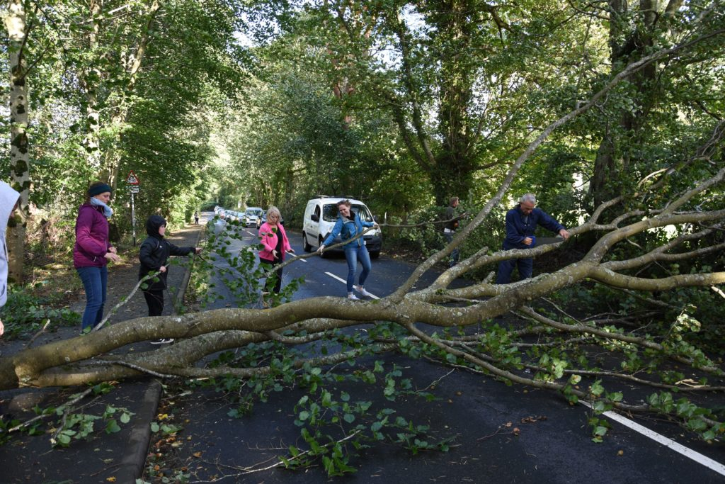 Drivers rally to clear road blocked by fallen tree
